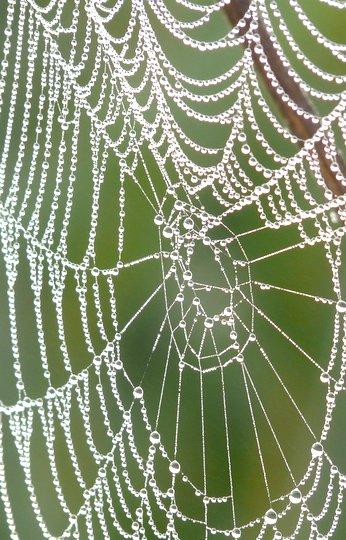 Spinnenzauber