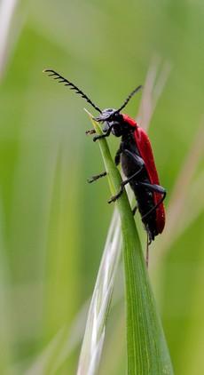 Sommer Käfer